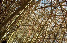 Bamboe Follies